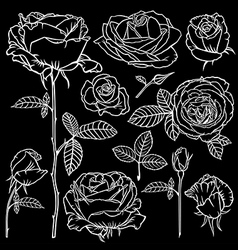 rose contour set black vector image