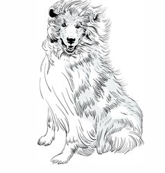 Sweet dog rough collie breed hand drawing vector