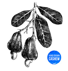 hand drawn cashew tree branch vector image vector image