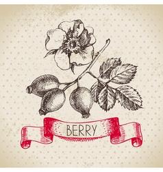Rose hips Hand drawn sketch berry vintage vector image vector image