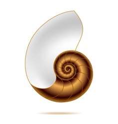 nautilus shell vector image vector image