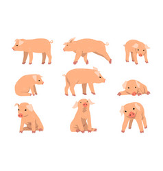 cute little pig set funny piggy in different vector image