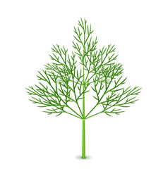 fresh dill isolated on white vector image
