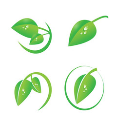 Green leaf with dew drops icon set vector