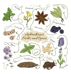 Hand drawn collection of spices and herbs vector