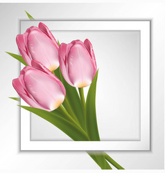 pink tulips paper frame on white background with vector image