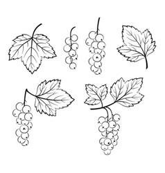 Set currant pictograms vector