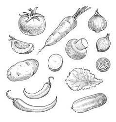 sketch vegetables tomato champignon hand drawn vector image