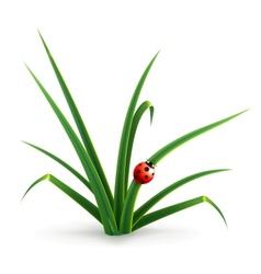 Ladybug and grass vector image vector image