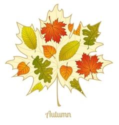 autumnal maple leaf background vector image