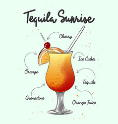 Engraved style tequila sunrise cocktail vector