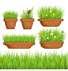 green grass in pots vector image