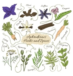 Hand drawn collection of spices with vector image