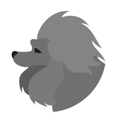 Pedigree dog head poodle vector