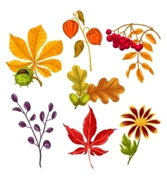 Set of stylized autumn leaves and plants Objects vector image