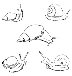 Snails Pencil sketch by hand vector