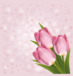 pink tulips on a pink background with blurred vector image vector image