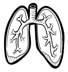 Human lungs doddle vector image