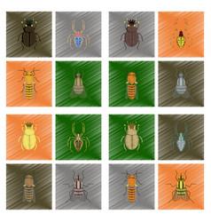 assembly flat shading style bug scarab araneus vector image