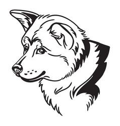 image akita inu dog on white background vector image