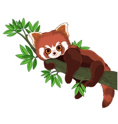 Red Panda vector image vector image