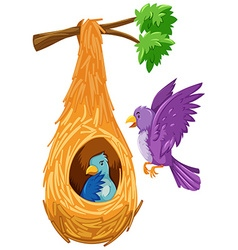 Bird in and out the nest vector image