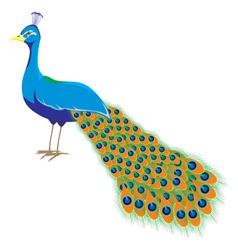 Peacock long tail vector