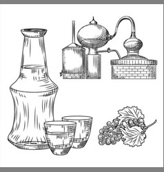 Set tsipouro greek alcohol on white background vector