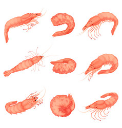 Shrimp icon set cartoon style vector