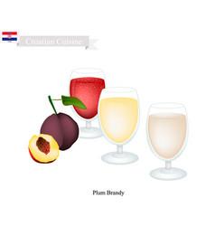 Slivovitz or plum brandy popular beverage in croa vector