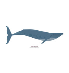 blue whale animal cartoon on isolated background vector image