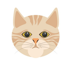 Burmilla cat in light color portrait on white vector