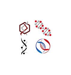 dna genetics template set vector image