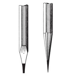 drawing pencil light and dark tones vintage vector image
