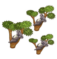 funny koala bears sleeps on trees animals vector image