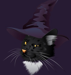 Kitty Witchy vector image