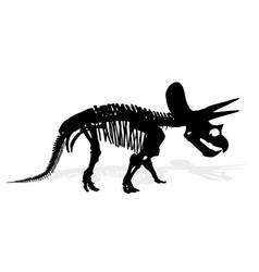 skeleton of dinosaur vector image