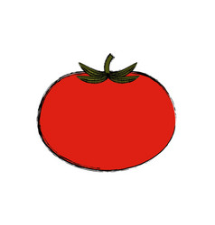 tomato vegetable natural vector image