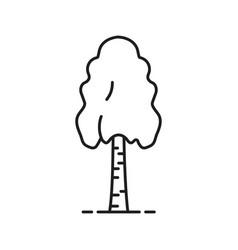 Birch tree linear icon vector