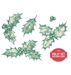 Collection of hand drawn holly vector