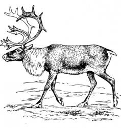 deer rangier tarandus vector image