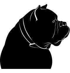 dog cane corso vector image