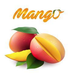 Fruit mango white background image vector