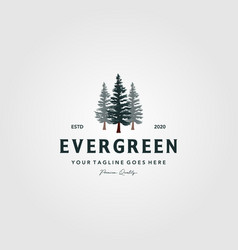 Pine tree vintage logo evergreen spruce fir vector