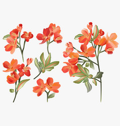 vintage watercolor floral elements isolated on a vector image