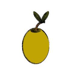 olive vegetable natural vector image vector image