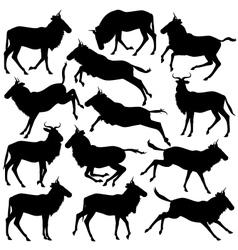 Wilderbeest silhouettes vector image