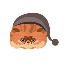 persian cat in hat with ball isolated on white vector image