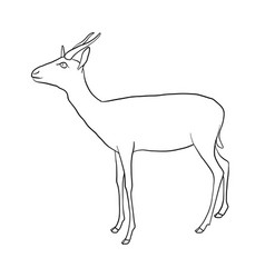 drawing antelope vector image