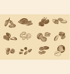 Natural organic nuts elements collection vector